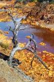 死亡和荒芜在Tinto河 免版税库存图片