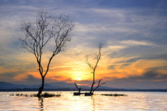 死亡树在湖 库存图片