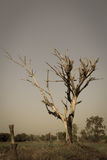 死亡树  库存图片