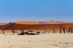死亡谷Sossusvlei美好的风景  免版税图库摄影