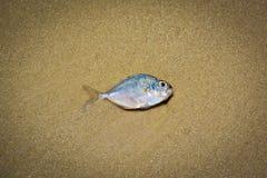 死亡鱼 库存照片
