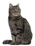 交叉品种猫, 7个月,坐 图库摄影