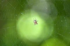 交叉庭院其中间蜘蛛网 免版税库存照片