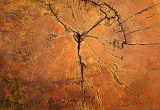 交叉橡木部分树桩结构树 库存照片