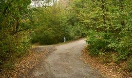 交叉路在森林里 库存照片