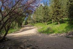 交叉路在森林里 免版税库存照片