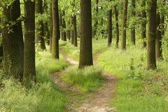 交叉路在森林里 免版税库存图片