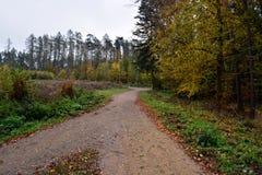 交叉路在秋天森林里 库存照片