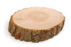 交叉年轮区分显示树干 免版税库存照片