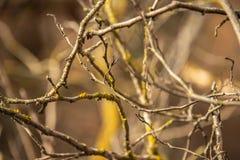 交错的树的分支 免版税库存照片