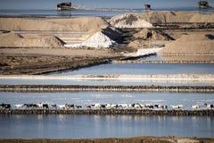 亦称盐湖Afrera湖Afdera或Giulietti或者Egogi,在远处Danakil,埃塞俄比亚 库存照片