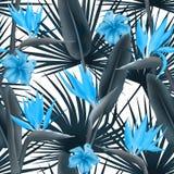 亦称鹤望兰Reginae开花起重机花或天堂鸟,夏威夷无缝木槿和的棕榈叶 皇族释放例证