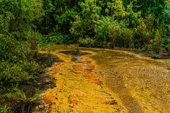 亦称Khao Pra轰隆Khram野生生物保护区,对鲜绿色水池Sa Morakot,旅游目的地的方式 绿色热带森林 免版税图库摄影