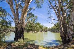 产树胶之树和马掌在墨累河,维多利亚,澳大利亚2弯曲 免版税库存照片