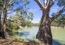 产树胶之树和马掌在墨累河,维多利亚,澳大利亚3弯曲 免版税库存照片