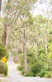 产树胶之树排行的郊区路 免版税库存图片