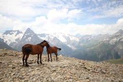 产驹与在山风景的一匹母马 库存照片