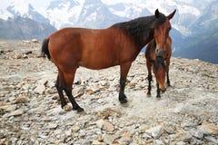 产驹与在山风景的一匹母马 免版税库存图片