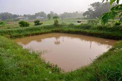 水产养殖自然鱼池 免版税库存照片