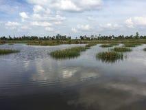 水产养殖系统,广泛的老虎虾文化农场 图库摄影