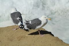亨廷顿海滩中央公园 免版税库存照片