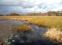 亨廷顿海滩的沼泽 库存图片