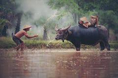 享受使用的亚裔男孩画象与水牛 农夫 库存照片