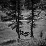 享受在吊床的人们自然 库存图片