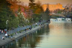 享受在Bega河河岸的人们日落  免版税库存图片