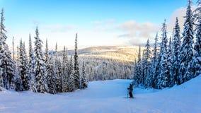 享受在Shuswap高地的滑雪者日落 免版税图库摄影