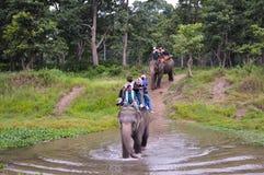 享受大象乘驾的人们 免版税库存照片