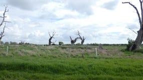享受天的橡树树精古老化石森林庆祝2000年1 免版税库存图片