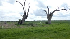 享受天的橡树树精古老化石森林庆祝2000年3 库存照片