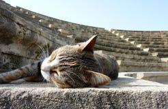享受太阳的睡觉离群猫在圆形露天剧场 免版税库存图片