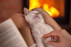 享受按摩的小的小猫在所有者膝部-坐的toge 免版税库存图片