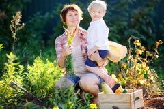 享受收获的妇女和她可爱的矮小的孙子 库存照片