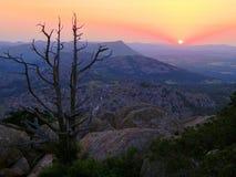 享受日落的树 免版税库存图片