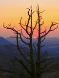 享受日落的树 库存照片
