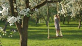 享受时间的无法认出的女孩,摇摆在一个木摇摆位子在一个开花的苹果树庭院里 股票录像