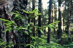 享受森林视图 走在森林里 库存照片