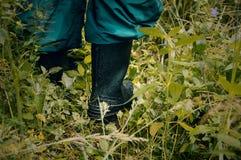 享受森林视图 走在森林里 免版税图库摄影