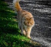 享受温暖的天的猫在芬兰 免版税库存图片