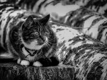 享受温暖的天的猫在芬兰 免版税库存照片