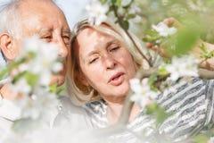 享受片刻的资深夫妇在他们开花的庭院里 免版税图库摄影
