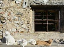 享受秋天太阳的四只猫 图库摄影