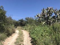 享受自然在墨西哥 免版税库存图片