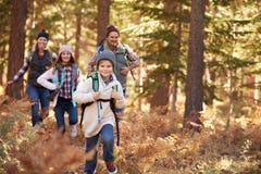 享受远足在森林里,大熊,加利福尼亚,美国的家庭 免版税库存照片