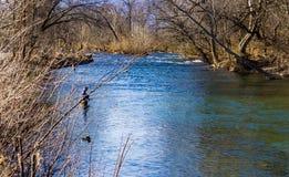 享受钓鱼在罗阿诺克河,弗吉尼亚,美国的虹鳟的两位飞行渔夫 图库摄影