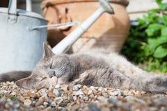 享受阳光的猫 免版税库存图片