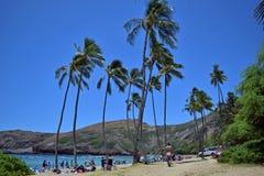 享受阳光,潜航和游泳在Hanauma海湾海滩,夏威夷的假日游客 免版税图库摄影